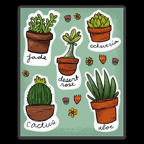Cute Succulent